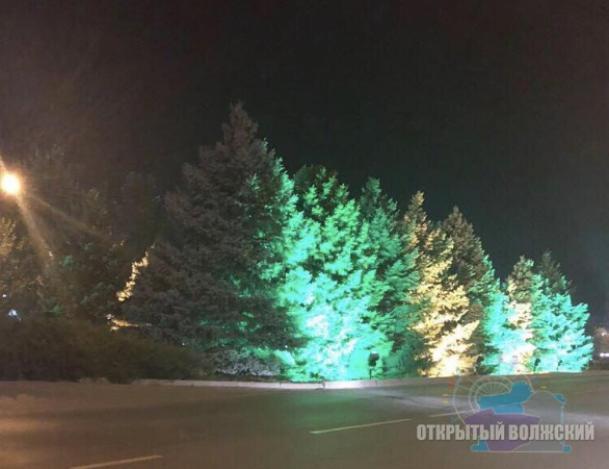 Круглогодичные деревья озарились светом в Волжском