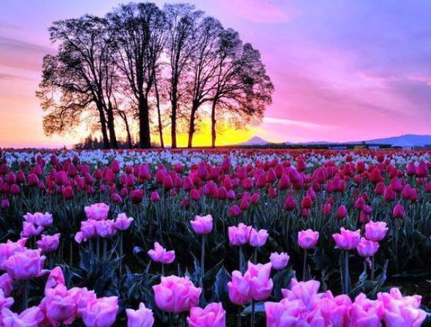 Во вторник волжан ждет настоящая весна