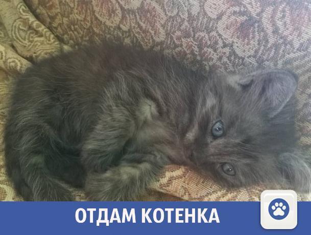 Пушистого котенка отдают в Волжском