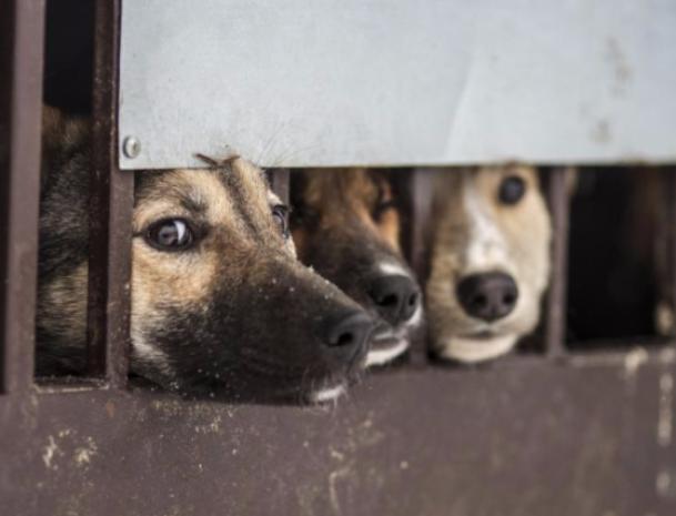 Город и область выделили всего 650 тысяч рублей на отлов бродячих собак в Волжском
