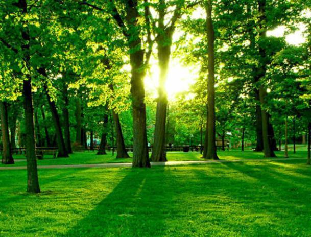 Осенью Волжский приблизится к названию «зеленый город»