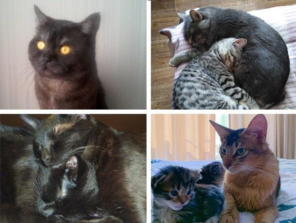 Василий, Борис, Вискас,Тихон, Алиса,Феникс и Аверест - необыкновенные котята с удивительной историей
