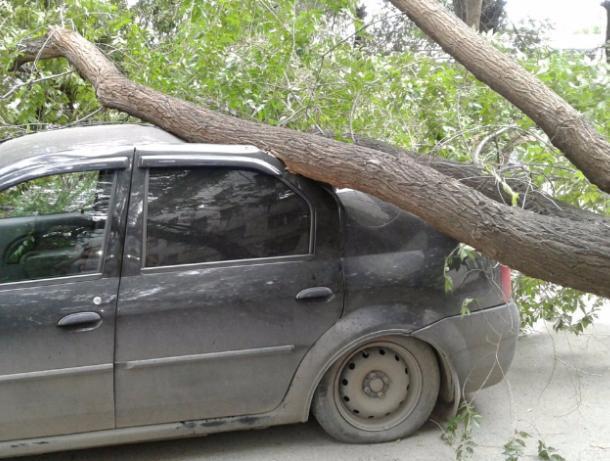 На машину волжанина свалилось дерево: водитель не может найти концов
