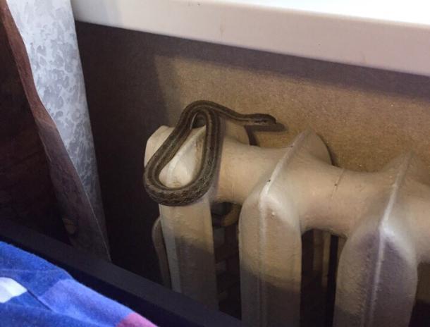 Волжанин в детской комнате обнаружил змею