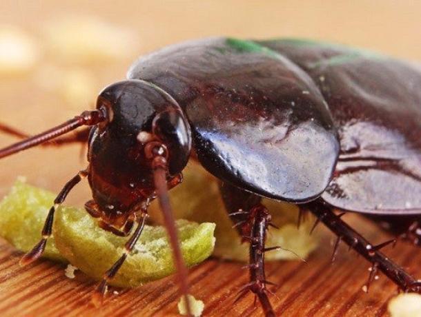 Блохи и тараканы лезут из подвала в наши квартиры, - волжане