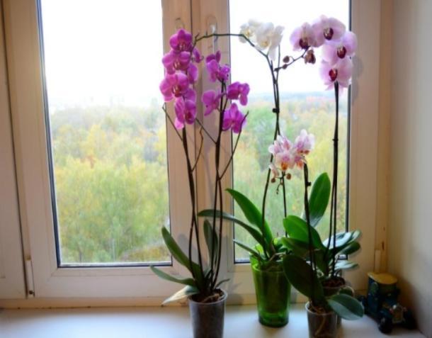 В Волжском будут разводить орхидеи