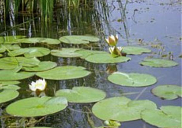 Под Волжским пытались отдать озеро в частные руки