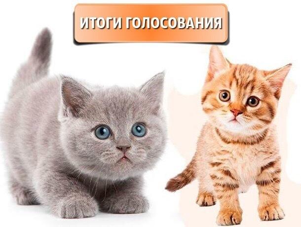 Так решил город - завершилось голосование в конкурсе «Мой любимый котик»