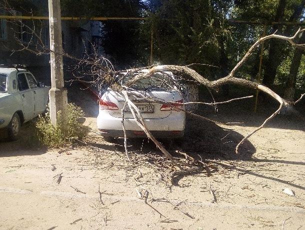 Как добиться компенсации за упавшее на автомобиль дерево, - эксперт