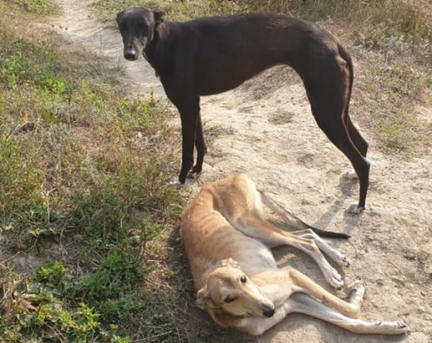 Породистых собак оставили умирать в нелюдимом месте