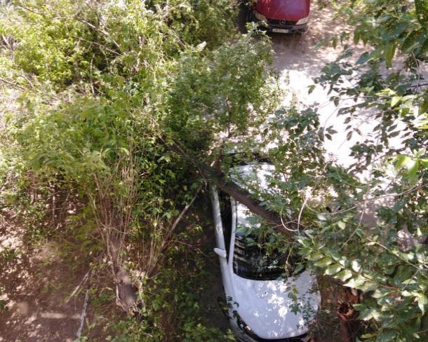 В Волжском от «деревопада» страдают автомобили