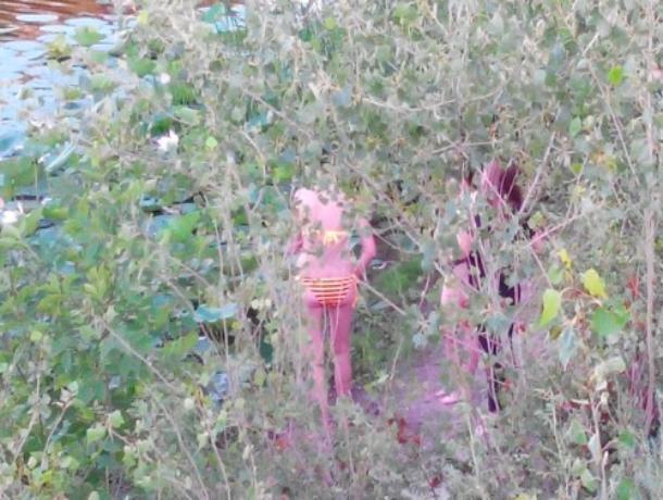 Горячие «пляжницы» искупались в озере лотосов в Среднеахтубинском районе
