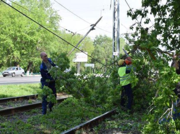 Упавшее из-за шторма дерево парализовало движение в Волжском