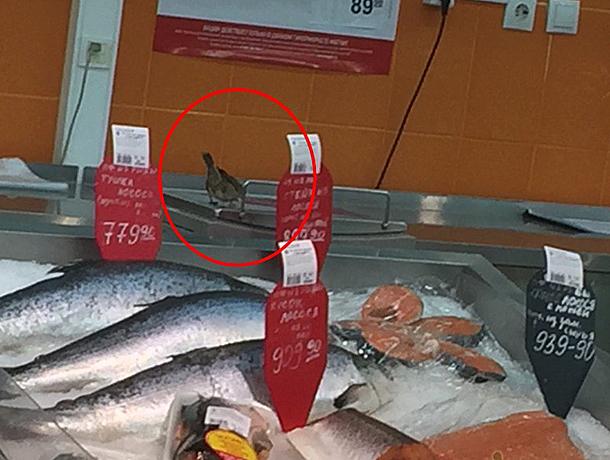 В Волжском наехали на торговую сеть «Магнит» за неопрятность и наглого воробья