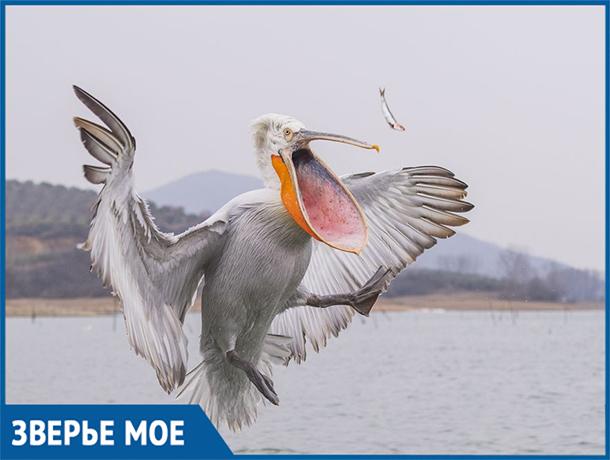 В Волго-Ахтубинской пойме царствовала кудрявая великанша баба-птица
