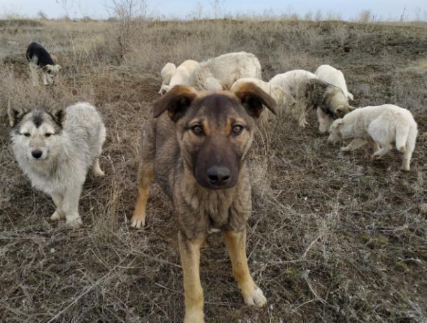 Волжский приют для собак подает сигнал SOS