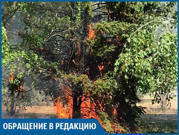 Подростки сожгли ель в сквере на Пионерской, - волжанин