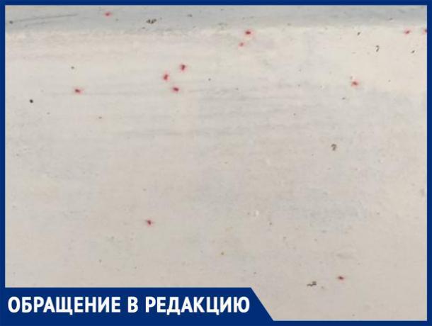 «Микрорайон оккупировали красные клещи», - волжанка