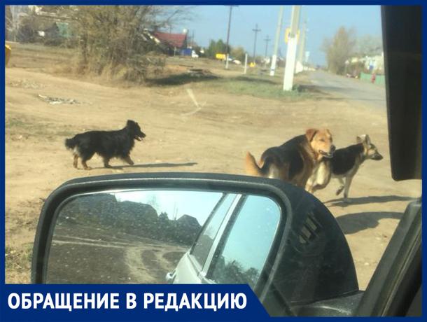 «Пришлось отбивать стаю собак от девушки с годовалым ребенком», - волжанка