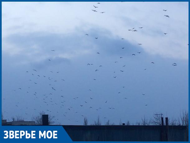 Черные птицы, словно куча насекомых, парили прямо над городом, - волжанка