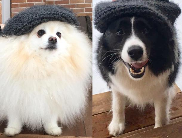 Популярная волжанка приютила бездомного пса