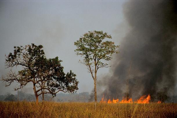Под Волжским неизвестные сожгли запас сена на зиму