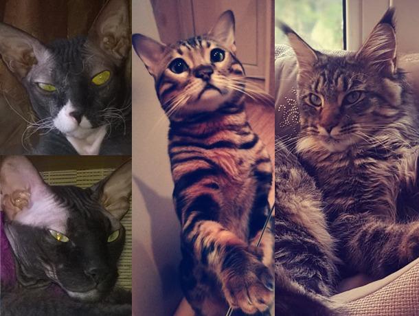 Шанти, Марсель, Филя и Тимка - каждый по-своему уникален