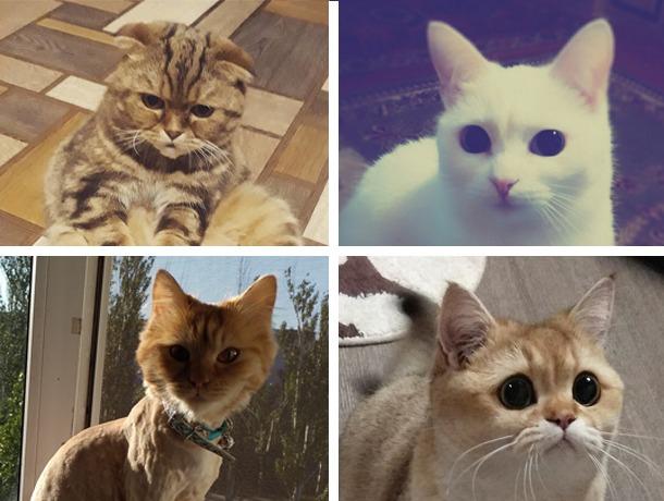 Фиона, Марта, Нура и Джессика в активной борьбе за главный приз