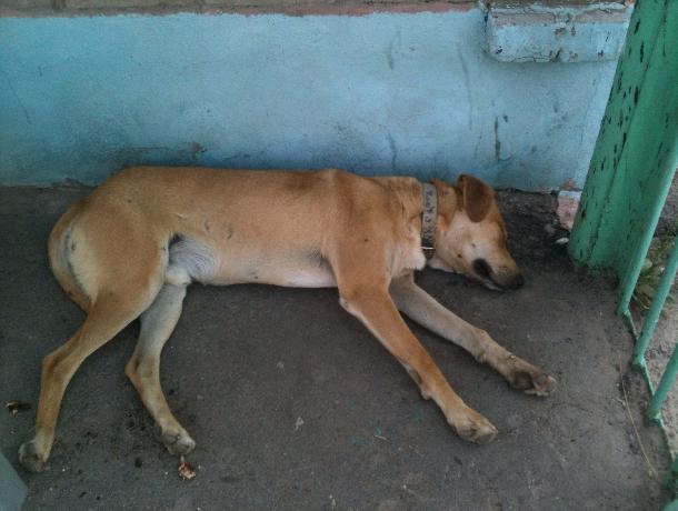 Нашествие бродячих собак заставило волжских электриков затариваться ультразвуковыми отпугивателями