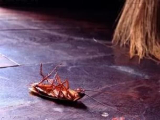 Четыре года тюрьмы грозит волжанину, который отравил двух детей средством от тараканов