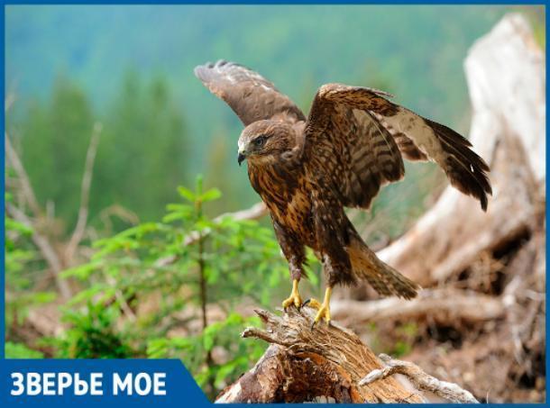 Орел улетел из Волжского и вернуться не обещал