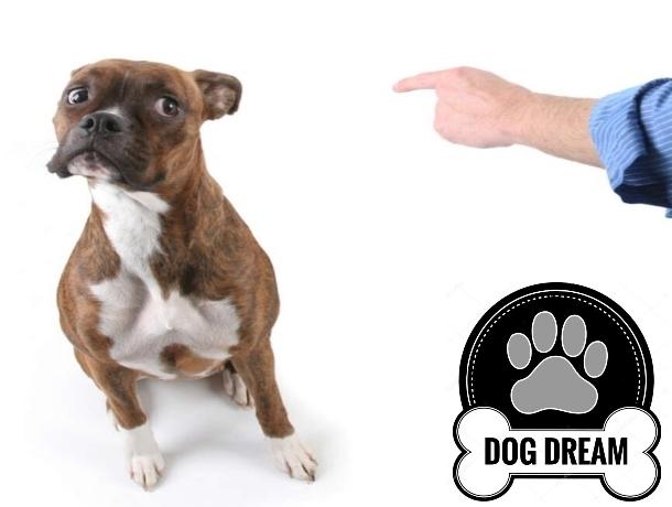 Ветеринары советуют натуральные продукты для долголетия собаки