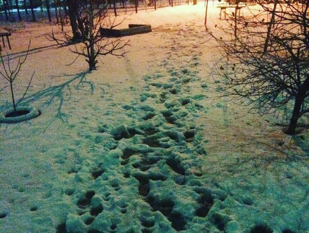 Волжане пожаловались на мартовскую зиму