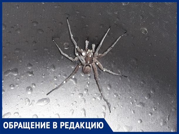 «Из раковины вылез огромный паук» ,- волжанка