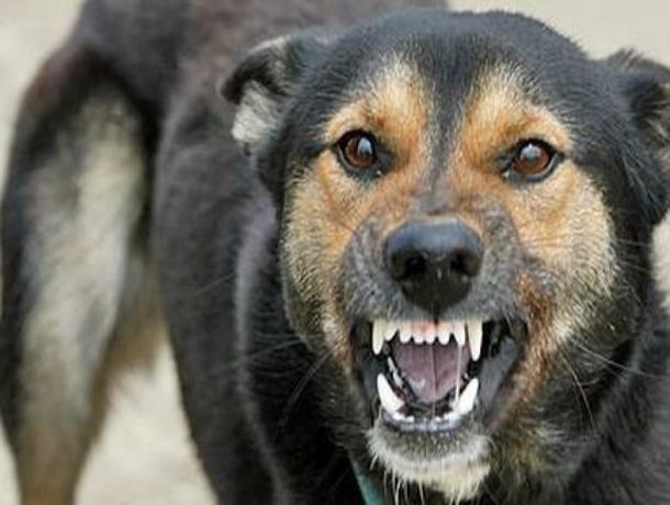 О профилактике бешенства животных рассказали волжанам