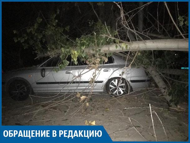 В Волжском старое дерево повредило дорогую иномарку