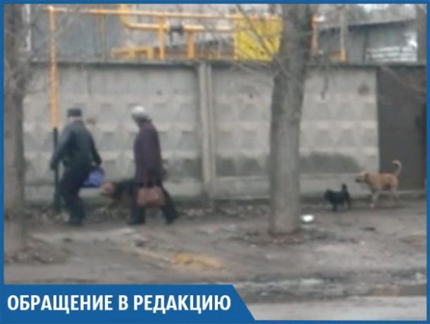 Мне страшно ходить по улице из-за бродячих собак около школы, - волжанка
