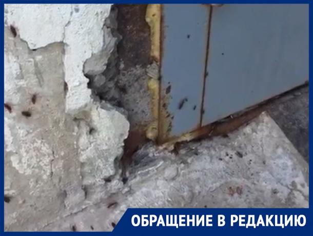 «Стены девятиэтажного дома кишат тараканами», - волжанка