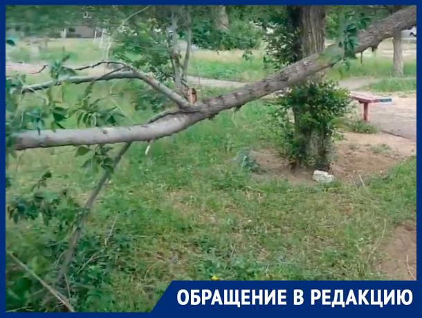 Сломанное дерево угрожает маленьким волжанам