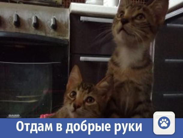 Ласковые и умные котята ищут дом в Волжском