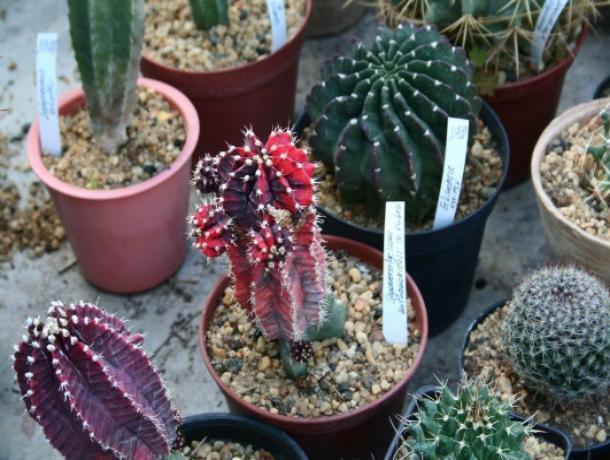 Любителей кактусов приглашают в оранжерею