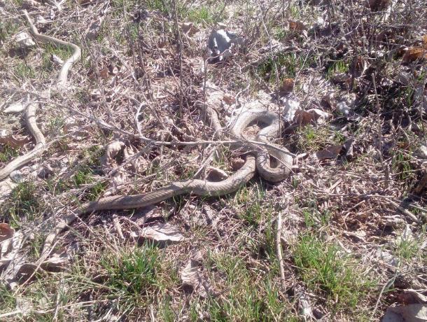 В парке «Волжский» проснулись змеи, - молодая мама
