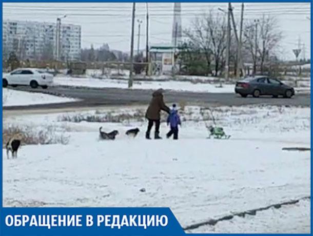 В новой части города свора собак напала на женщину с ребенком, - волжанин