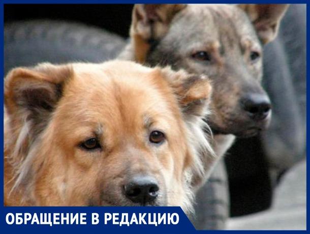 «На О. Зеленом бегает стая собак, за детей страшно»,- волжанка