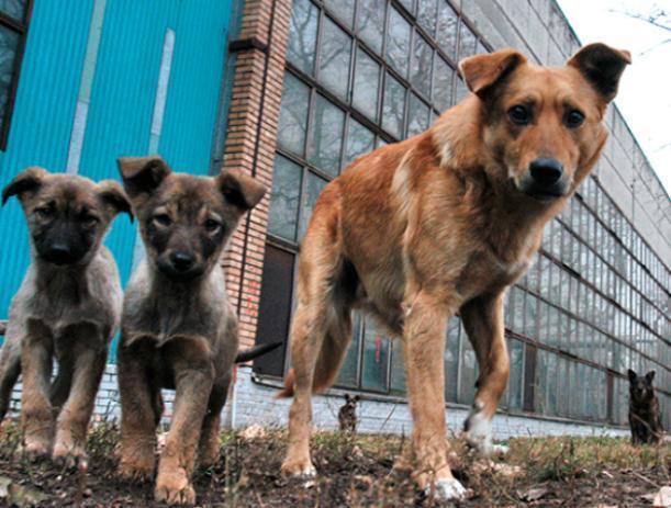 В Волжском активно борются с бродячими собаками