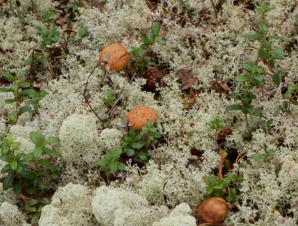 Волжане могут отравиться собранными грибами