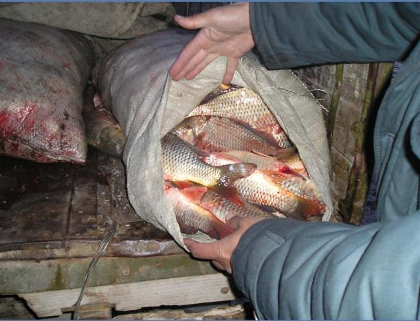 В Среднеахтубинском районе поймали браконьеров