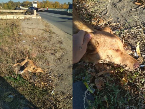 Волжане спасли сбитую собаку на острове Зеленый