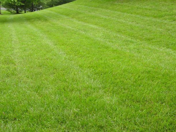 На уход за газоном в парке «Волжский» потратят 1 миллион