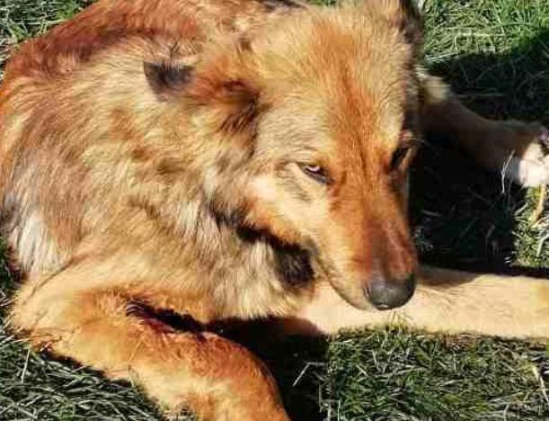 Сбитая собака уже сутки ждет помощи на обочине дороги